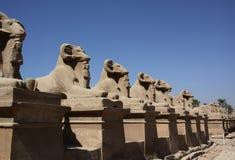 RAM en Luxor Foto de archivo