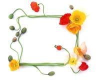 ram för 2 blomma Fotografering för Bildbyråer
