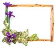 ram för 6 blomma Arkivbilder