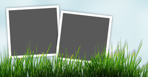 Ram för bild två på gräs Royaltyfri Illustrationer