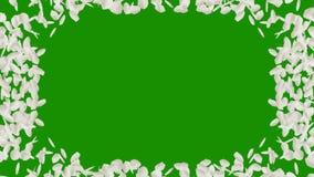 Ram för foto av vitroskronblad med den alfabetiska kanalen royaltyfri illustrationer