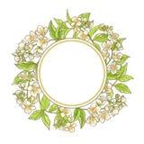 Ram för jasminfilialvektor Royaltyfri Bild