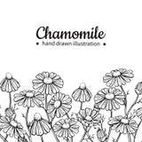 Ram för kamomillvektorteckning Isolerade blomma och sidor för tusensköna lös Växt- inristad stilillustration Royaltyfri Foto