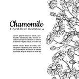 Ram för kamomillvektorteckning Isolerade blomma och sidor för tusensköna lös Växt- inristad stilillustration stock illustrationer