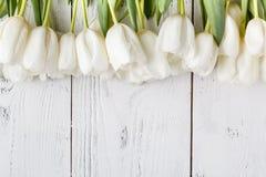 Ram för kort med naturliga vita tulpan royaltyfri fotografi