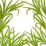 Ram för Lemongrassväxtvektor stock illustrationer