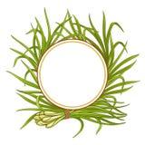 Ram för Lemongrassväxtvektor vektor illustrationer