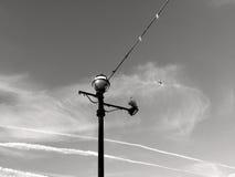 Ram för mitt för ljus pol för gata med seagullen Royaltyfri Foto