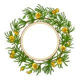 Ram för Rooibos filialvektor royaltyfri illustrationer