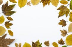 Ram för sammansättning för höstlägenhet som lekmanna- göras av isolerade torra färgrika sidor på vit bakgrund, kopieringsutrymme, royaltyfri bild