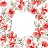 Ram för vildblommarosblomma i en vattenfärgstil Royaltyfria Bilder