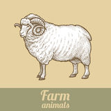 Ram farm animals. vector illustration