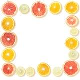 Ram från citrusa skivor Royaltyfria Foton