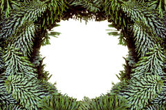 Ram från julgranfilialer fotografering för bildbyråer