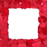 Ram från rosor på födelsedag, valentin och moderdag med c Fotografering för Bildbyråer