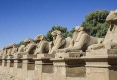Sfinxen bij Tempel Karnak. Luxor. Stock Afbeeldingen