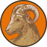 Ram Goat Head Circle Drawing illustration de vecteur