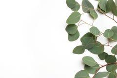 Ram, gräns som göras av cinerea sidor för grön silverdollareukalyptus, och filialer på vit bakgrund alla några objekt för den blo royaltyfri fotografi