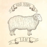 Ram hand drawn illustration. Stock Photo