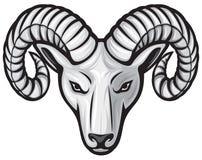 Ram head. Head of the ram, white ram Stock Photos