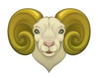 Ram Head Stock Afbeelding