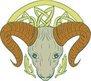 Ram Head Celtic Knot ilustração do vetor