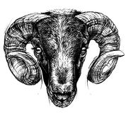 Ram Head Drawing line work. Royalty Free Stock Photos