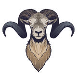 Ram head illustration. In vector on white background Royalty Free Stock Photos
