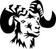 Ram Stock Images