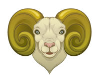 Ram head. On a white background Stock Image