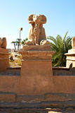 Ram-headed sphinx. Alley of ram-headed sphinxes in front of Karnak temple, Egypt Stock Image