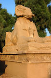 Ram headed sphinx. A ram headed sphinx statue in the avenue leading up to the magnificent Ancient Egyptian Temple of Karnak near Luxor, Egypt Stock Image
