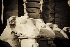Ram headed Sphinx sculptures, Karnak, Egypt., Karn Royalty Free Stock Photography