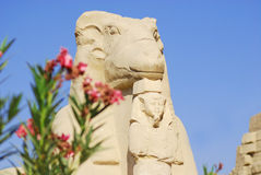 Ram-headed sphinx Royalty Free Stock Photography