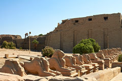 Ram-headed sphinxes. Alley of ram-headed sphinxes in front of Karnak temple,Egypt Royalty Free Stock Images