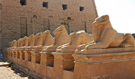 Ram-headed sphinxes Stock Photo