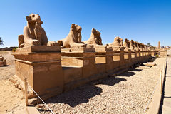 Ram-headed sphinxes Royalty Free Stock Images