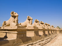 Ram-headed Sphinxes At The Gates Of Karnak Royalty Free Stock Photo