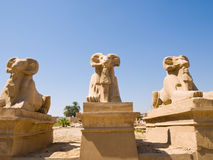 Ram-headed Sphinxes At The Gates Of Karnak Royalty Free Stock Image