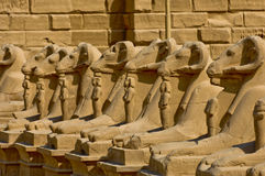 Ram-headed sphinxes-Egypt Temple of Karnak Royalty Free Stock Photo