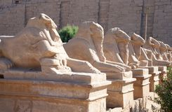 Ram-headed sphinxes at Karnak temple Stock Image