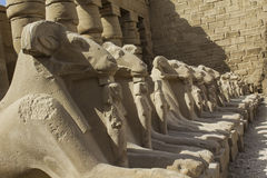 Sphinxes at Karnak Temple. Luxor. Stock Photos