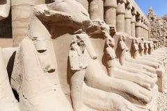 Ram-headed sphinxes at Karnak Temple Luxor. Egypt. 20 September 2017, Luxor Egypt Royalty Free Stock Image