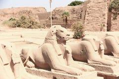 Ram-headed sphinxes at Karnak Temple Luxor. Egypt. 20 September 2017, Luxor Egypt Royalty Free Stock Images