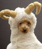 RAM-Hund Lizenzfreie Stockfotos