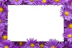 Ram/kant av purpura blommor Royaltyfri Fotografi
