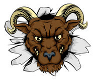 Ram mascot smash out. A mean ram character or sports mascot breaking out Stock Photography