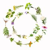Ram med att läka växter som isoleras Fotografering för Bildbyråer