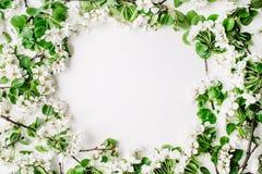 Ram med blommor, filialer, sidor och kronblad Fotografering för Bildbyråer