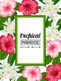 Ram med den tropiska blommahibiskusen och plumeria Avbilda för ferieinbjudningar, hälsningkort, affischer Royaltyfri Bild